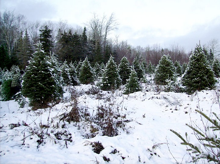 Our Christmas tree lot in winter